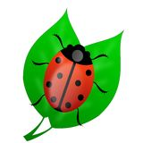 Insect ladybird on green leaves Royalty Free Stock Photo