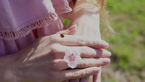 Insect Ladybird on the hands of woman with flower. 1 stock video