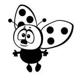 Insect ladybug Stock Photos