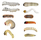 Insect larvae (caterpillars) set Stock Images