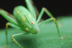Insect on Leaf Royalty Free Stock Image