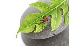 Insect on leaf Stock Images