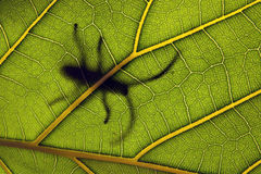 Insect on a leaf Stock Images