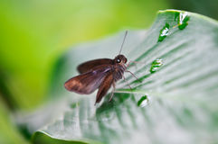 Insect on the leaf Royalty Free Stock Image