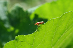 Insect on leaf. Very good look. Insect close up on green leaf stock image