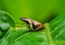 Insect on a leaf Stock Photography