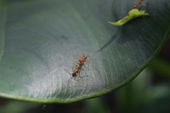 Insect, Leaf, Fauna, Macro Photography royalty free stock photography