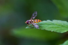 Insect on leaf grass Stock Photos