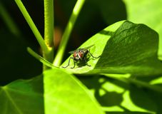 Insect, Leaf, Macro Photography, Invertebrate royalty free stock image