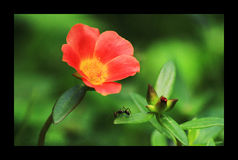 Insect sri lanka Stock Image