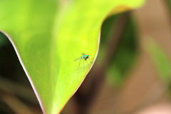 Insect on leaf Royalty Free Stock Images