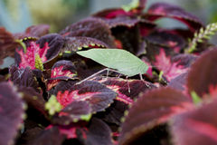 Insect on leaves. Stock Images