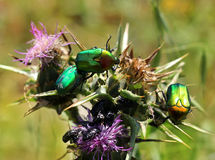 Insect life Royalty Free Stock Photo