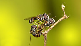 Insect love.... Stock Photo