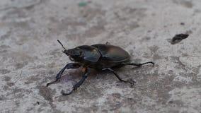 Insect macro black beetle stock footage