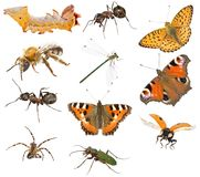 Insect macro collection royalty free stock image