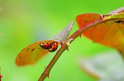 Insect, Macro Photography, Leaf, Close Up Royalty Free Stock Photos
