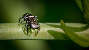 Insect, Macro Photography, Pest, Close Up Stock Image