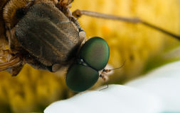 Insect macro Stock Image