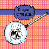 Insect in magnifier. colorado potato beetle Royalty Free Stock Photos