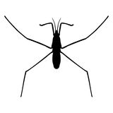 Insect in magnifier.water strider.  Stock Image