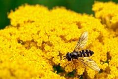 Insect & Melbourne Royalty-vrije Stock Afbeeldingen