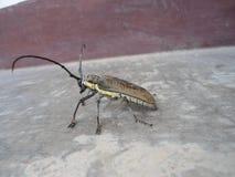 Insect met antena royalty-vrije stock afbeeldingen