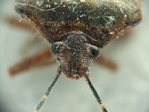 Insect met antennes Stock Fotografie