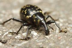 Insect met neus royalty-vrije stock fotografie