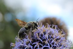 Insect met stuifmeel royalty-vrije stock afbeelding