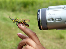 Insect model Stock Photography