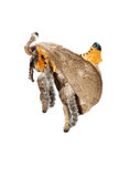 Insect moth Stock Photo