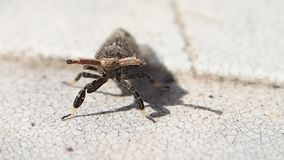 Insect moving a little. An insect moving a little on a table stock video footage