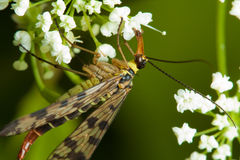 Free Insect On Flower Stock Images - 16039154
