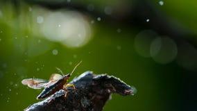 Insect onder de regen, Macroschot stock fotografie