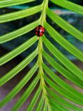 Insect op blad royalty-vrije stock fotografie