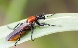 Insect op blad Stock Fotografie