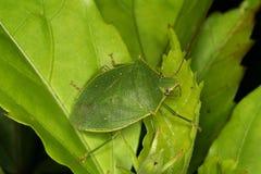 Insect op bladeren Stock Afbeeldingen