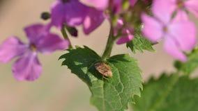 Insect op bladeren stock fotografie