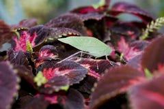 Insect op bladeren. Stock Afbeeldingen