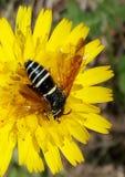 Insect op bloem stock foto's