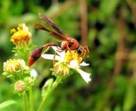 Insect op bloem Stock Foto