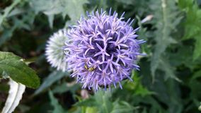 Insect op bloem Royalty-vrije Stock Fotografie