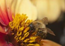 Insect op bloem royalty-vrije stock foto's