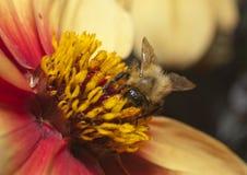 Insect op bloem stock afbeeldingen
