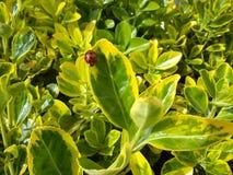 Insect op de bladeren Royalty-vrije Stock Afbeeldingen