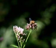 Insect op de bloem Stock Foto