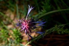 Insect op de bloem royalty-vrije stock foto