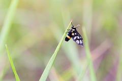 Insect op de bovenkant van het gras Royalty-vrije Stock Fotografie