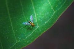 Insect op de groene stijl van het bladbehang Royalty-vrije Stock Fotografie